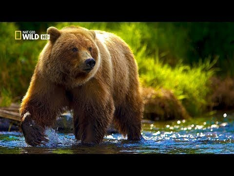Wild France - Fascinating Animals of Europe Nature New HD Documentary 2017