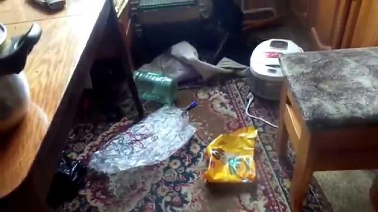 Хаски в квартире