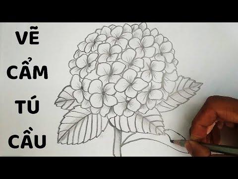 Vẽ Hoa Cẩm Tú Cầu bằng bút chì – How to draw Hydrangea Flower