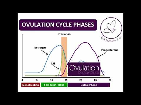 How do Ovulation Double Check Tests work