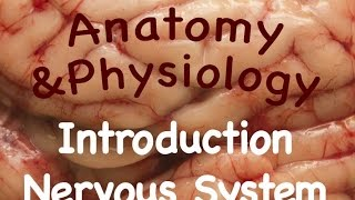 Nervous System : Anatomy and Physiology Lectures