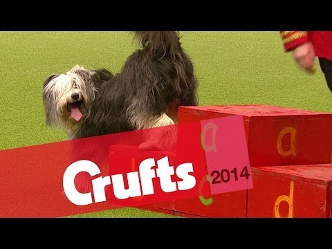 Heelwork to Music Competition | Day Two | Crufts 2014