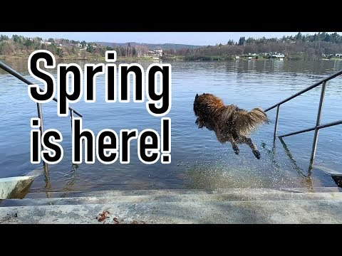 Spring is Finally Here!!! | Dog Jumping in Water Slow Motion