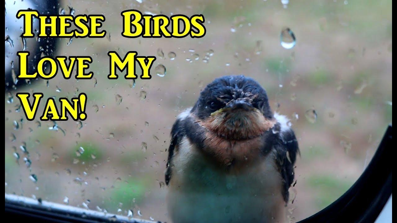 these-birds-love-my-van-north-dakota-vanlife-on-the-road