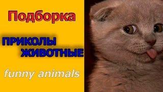 Смешно животные ПРИКОЛЫ про котов 2014/ Funny Animals