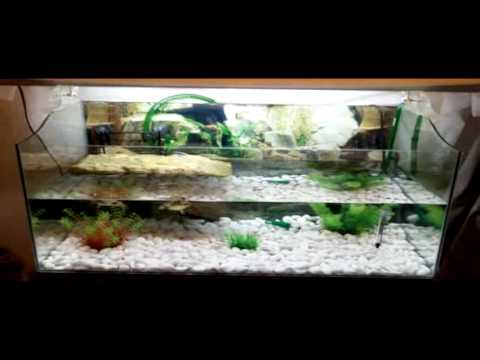 Acquario tartarughe youtube for Isolotto per tartarughe