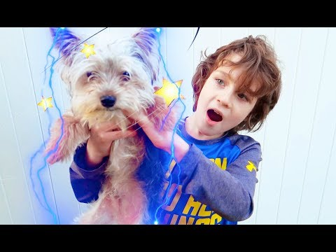 Emrick & Elias In The Magical Dog Adventure | In Real Life Beahero kids Movie