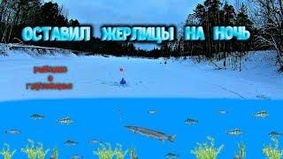 Оставил жерлицы на ночь Рыбалка в глухозимье на реке Керженец