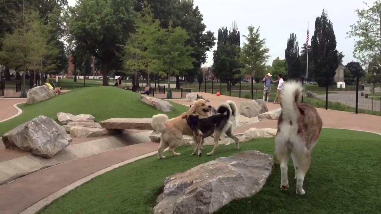 Canton Dog Park