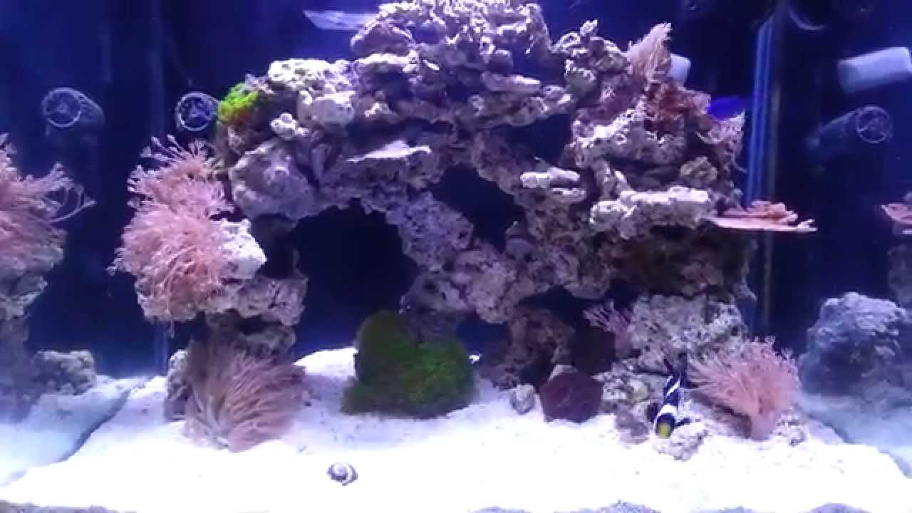 60 gallon cube reef (update 2) day 24 - YouTube