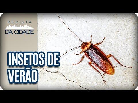 Receitas Caseiras Contra Insetos Do Verão - Revista Da Cidade (23/01/18)