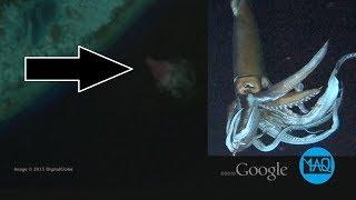 CUMI-CUMI RAKSASA ? inilah 5 penampakan hewan paling misterius yang tertangkap kamera google earth