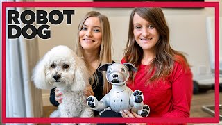 Getting A Robot Dog for Our Dog  Meet AIBO!
