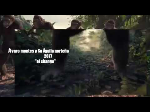 """""""El chango"""" Álvaro montes y su águila norteña 2017"""