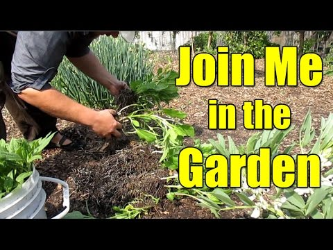 Garden Happenings Sunday 04/09/17 Bay Area California Zone 9b