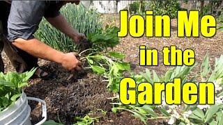 Video Garden Happenings Sunday 04/09/17 Bay Area California Zone 9b download MP3, 3GP, MP4, WEBM, AVI, FLV November 2018