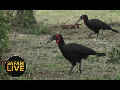 safariLIVE - Sunset Safari - December 8, 2018
