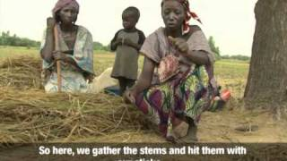 Niger - Rice Farming