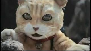 โฆษณาแมวน่ารักมาก