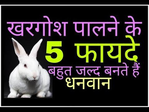 khargosh जिस घर में खरगोश पाला जाता है उनके लिए खुशखबरी 5 फायदे बनाते हैं करोड़पति