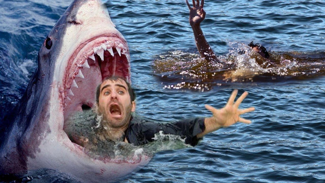 Phim kinh dị Mỹ 2016, Cá Mập ăn thịt người 2016