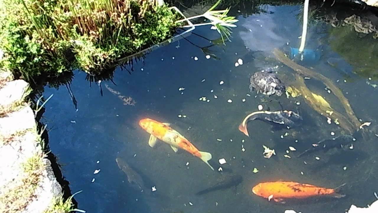 estanque en el jard n 3100 litros 5 10 12 youtube