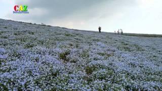 20110508 ひたち海浜公園 ネモフィラの丘 1080P30.mkv ネモフィラの丘 検索動画 27