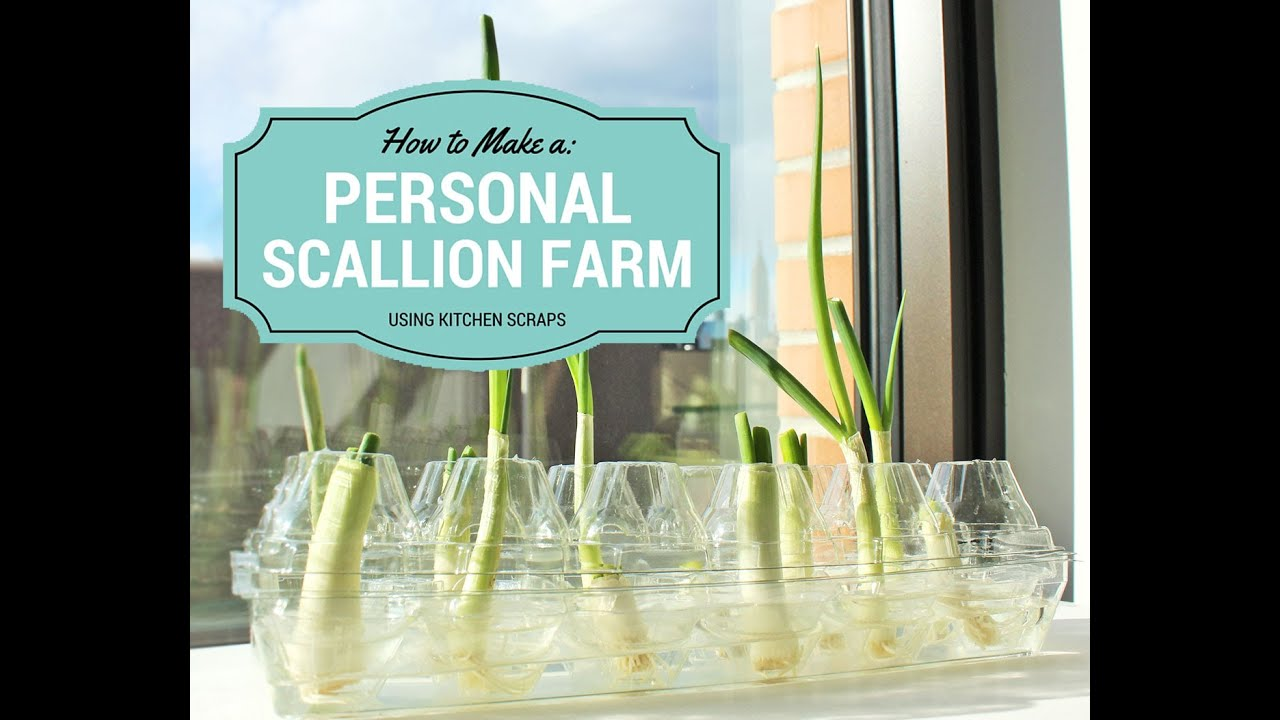 Easiest Way to Regrow Scallions All Year-Round - YouTube