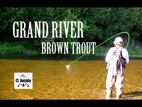 Grand River Brown Trout