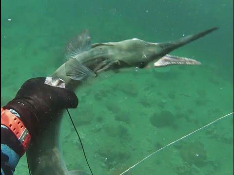 ยิงปลาทะเลอ่าวไทยจากประจวบถึงชุมพร Gulf of Thailand Spearfishing EP.2