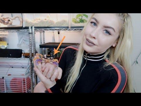 I'VE GOT CRABS...As a Pet. (Meet My Halloween Crab)