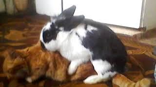Кролик ебет кота