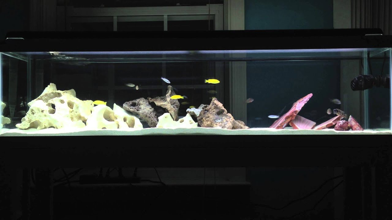 Project Awesome African Cichlid Tank Youtube
