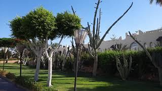 REEF OASIS BEACH RESORT Обзор территории отеля Египет 2021 Шарм Эль Шейх