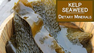 Kelp Seaweed, A Concentrated Source of Dietary Minerals