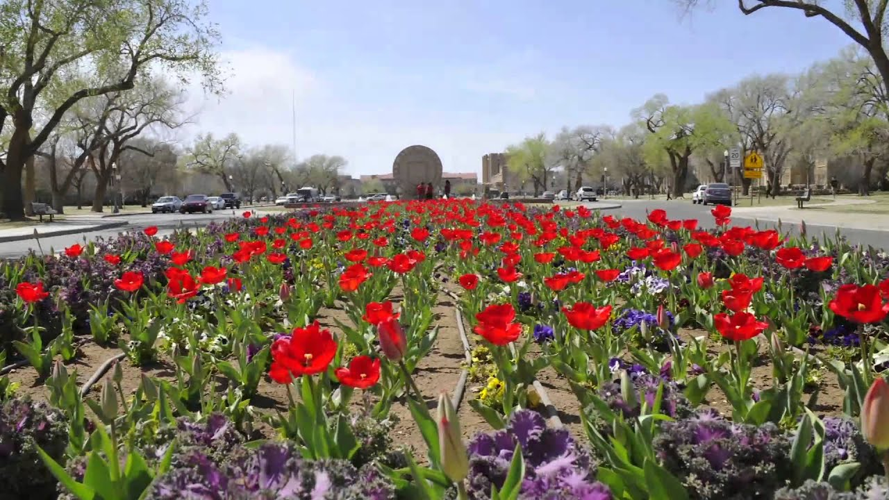 Tulips blooming at texas tech timelapse youtube for Tulip garden in texas