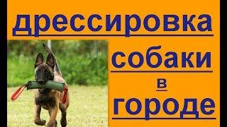дрессировка собаки в городе