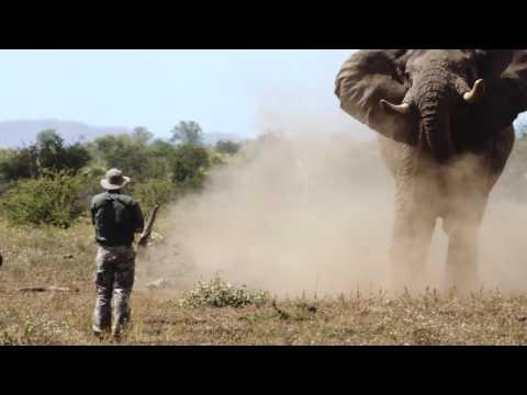 Elephant Charge - Ivan Carter