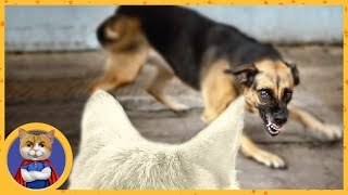 Спасение кошечки истерзанной собаками. Вся история