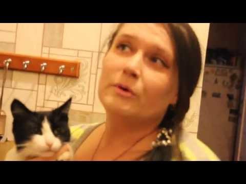 как отучить кошку гадить не наместе