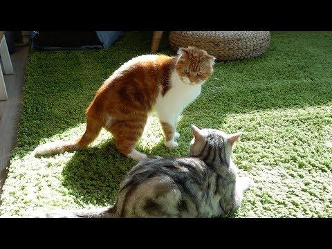 급 반전되는 살벌한 고양이들 싸움