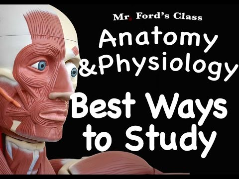 Muscular System : Best Ways to Study the Muscular System (09:08 ...