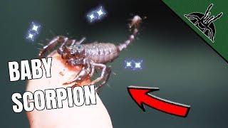 scorpion-updates-bonus-stuff