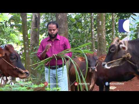 An Organic Vegetable farm in Kollam | Haritham Sundaram  | Kaumudy TV