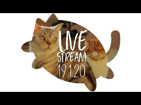생방송-수리노을-고양이가족-2019년-1월-20일-live-suri