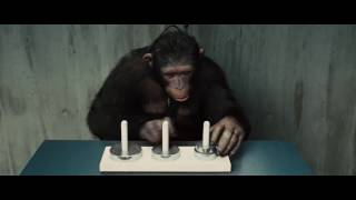 The most intelligent chimpanzee in the history! Incredible arithmetic speed!