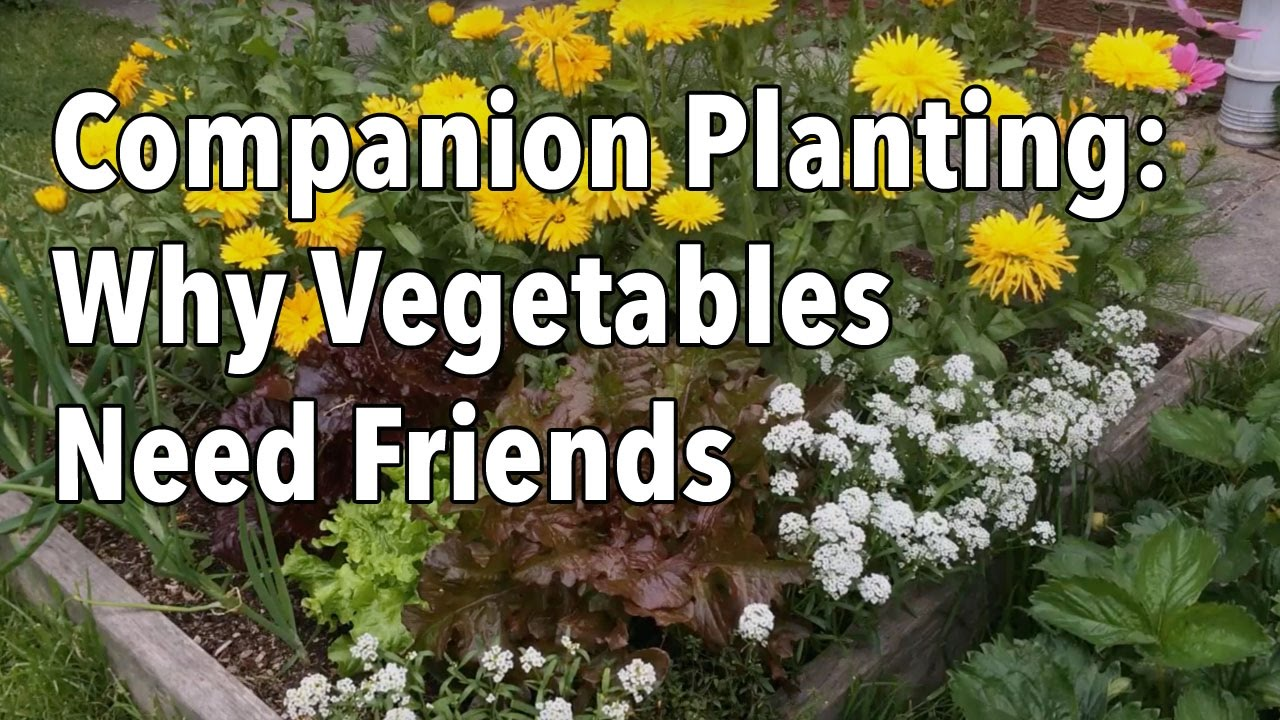 Planting a vegetable gardening - Companion Planting Flowers With