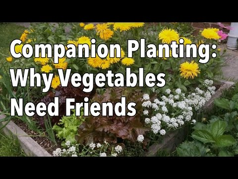 Why You Should Plant Flowers With Your Vegetables