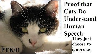 PTK01: Philip The Kat: Cats Do Understand Speech