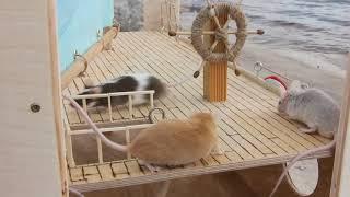 Смешные питомцы. Мыши. Корабль для декоративных мышей.